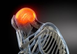 Adderall & Brain Damage