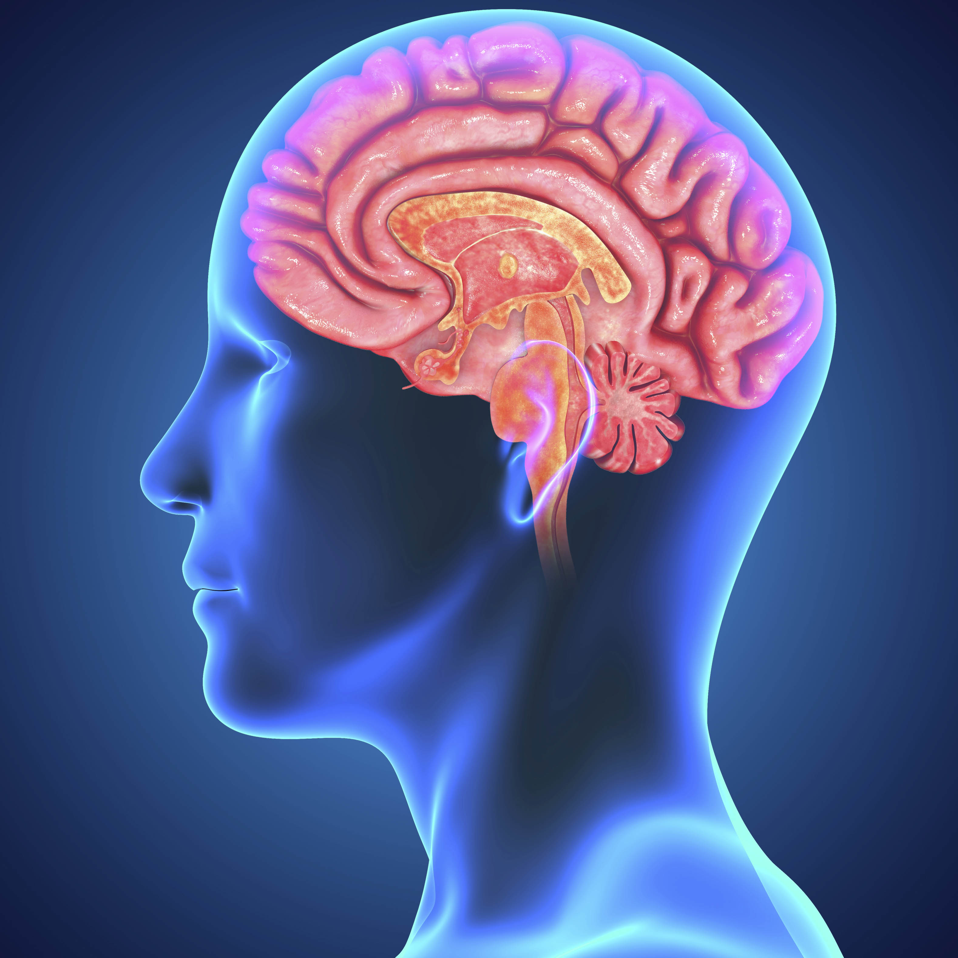 Brain Functionality