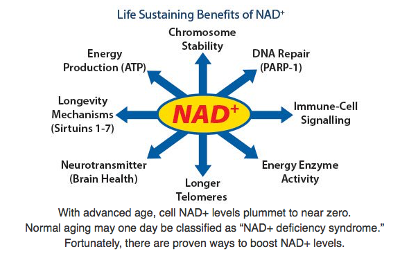 NAD+ Aging